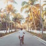 Ein junger Mann mit WINGMEN Media Cap fährt mit dem Fahrrad auf einer leeren Straße, Sommer, zwischen Palmen, Lifestylefotografie, WINGMEN Media