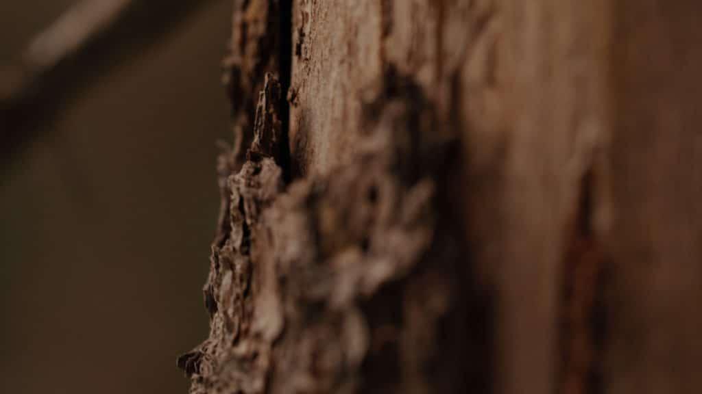 Makroaufnahme von Holzrinde an einem Baum, braun, Natur, nordweis Unternehmensgruppe, Imagefilm, Moodfilm, WINGMEN Media